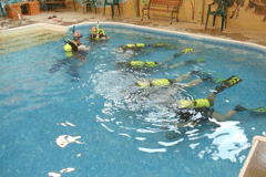 divers den_training_pool